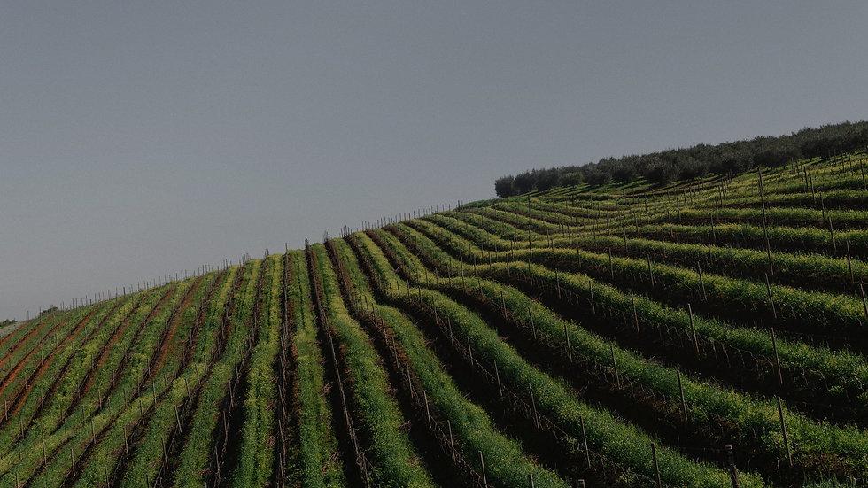 Winelands_edited_edited.jpg