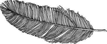 feather-divider.png