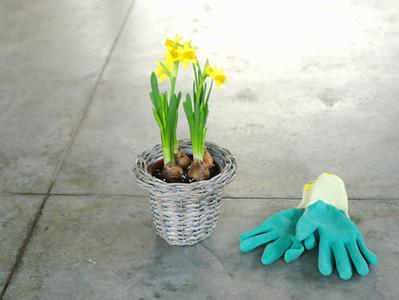 10 Must Have Plants / 10 Plantas Que Você Deveria Ter