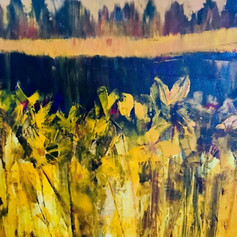 Marsh Irises at Pitt River