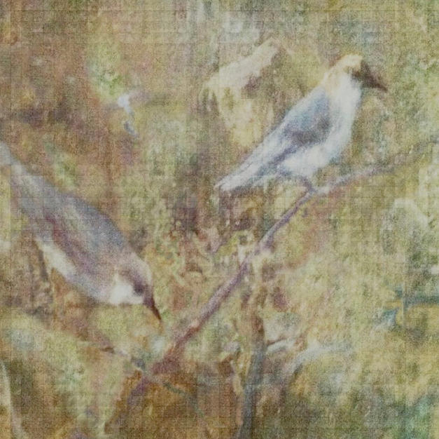 Wintering Birds