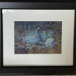 Swans at Ambleside