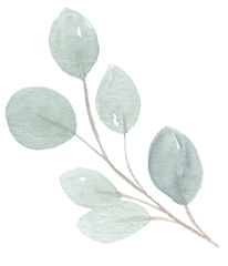 eucalyptus silver dollar-Recovered.png