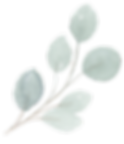 eucalyptus silver dollar-Recovered2.png