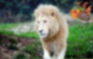 natura_edited_edited.jpg