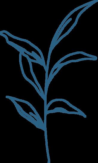 24_botanical1.png