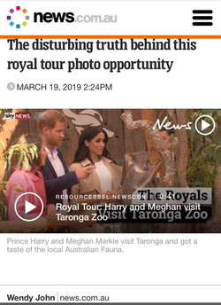 news.com.au_koala chlamydia story