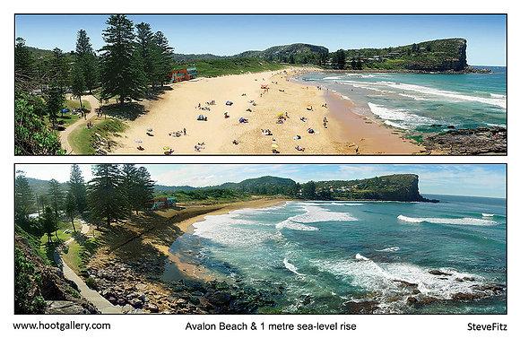 Avalon Beach & 1 metre sea-level rise