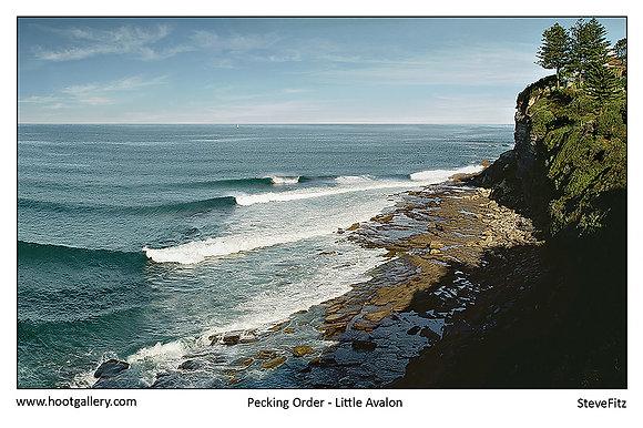 Pecking Order - Little Avalon