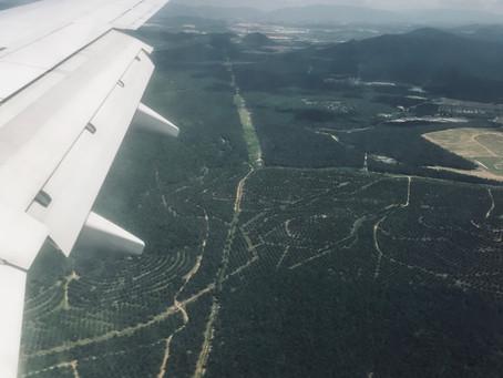Bosques sin vida.