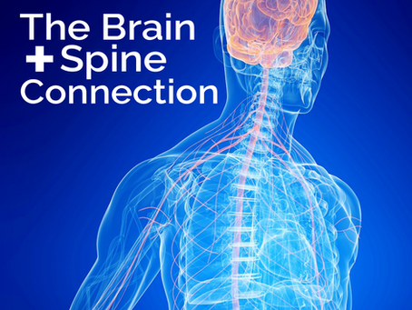 The Brain + Spine Connection