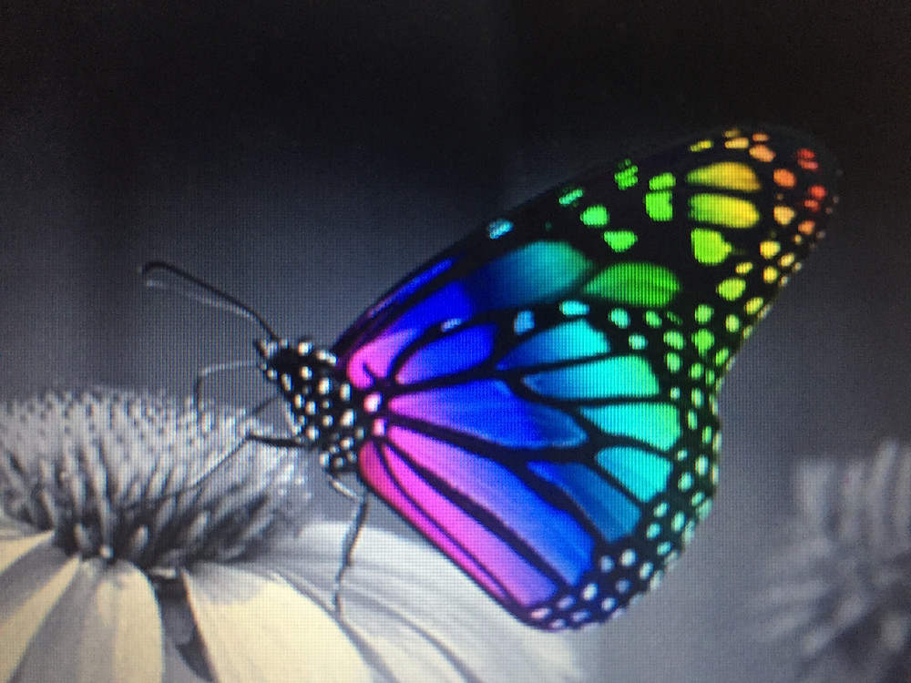 Rainbow colored butterfly on flower
