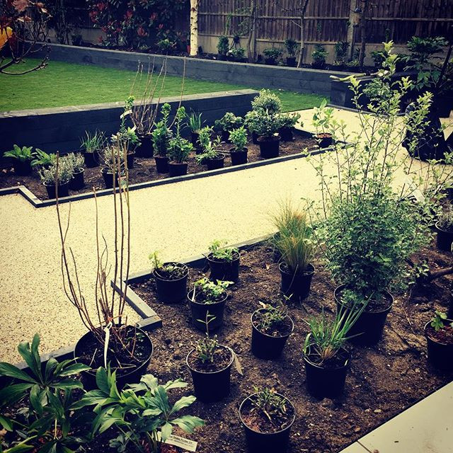 Plants being set out on site in SW14 reading for planting