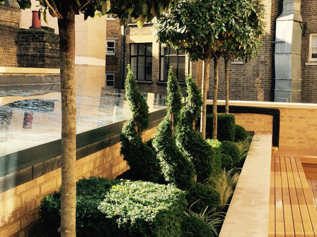 Commercial landscaping in W1 complete