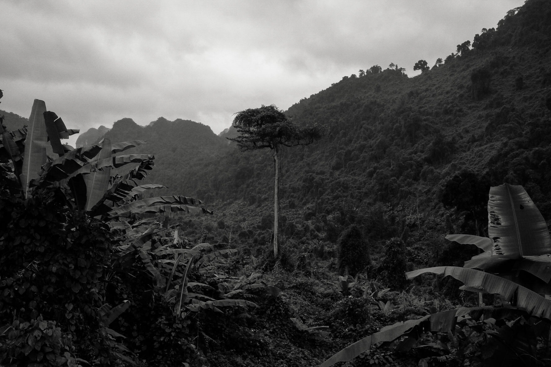 Vietnam jungle landscape clouds