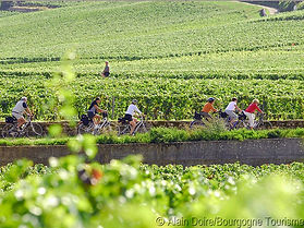 Velos-vignoble_Photo-Alain-Doire_Bourgog