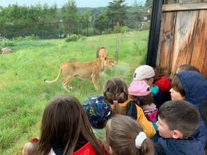 CP/GS/CE1 : Sortie au Parc Animalier