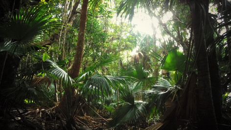 Bonin jungle & Bonin green