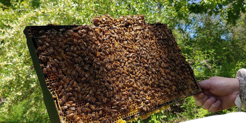 Beekeeping Experience:  Coming Soon!