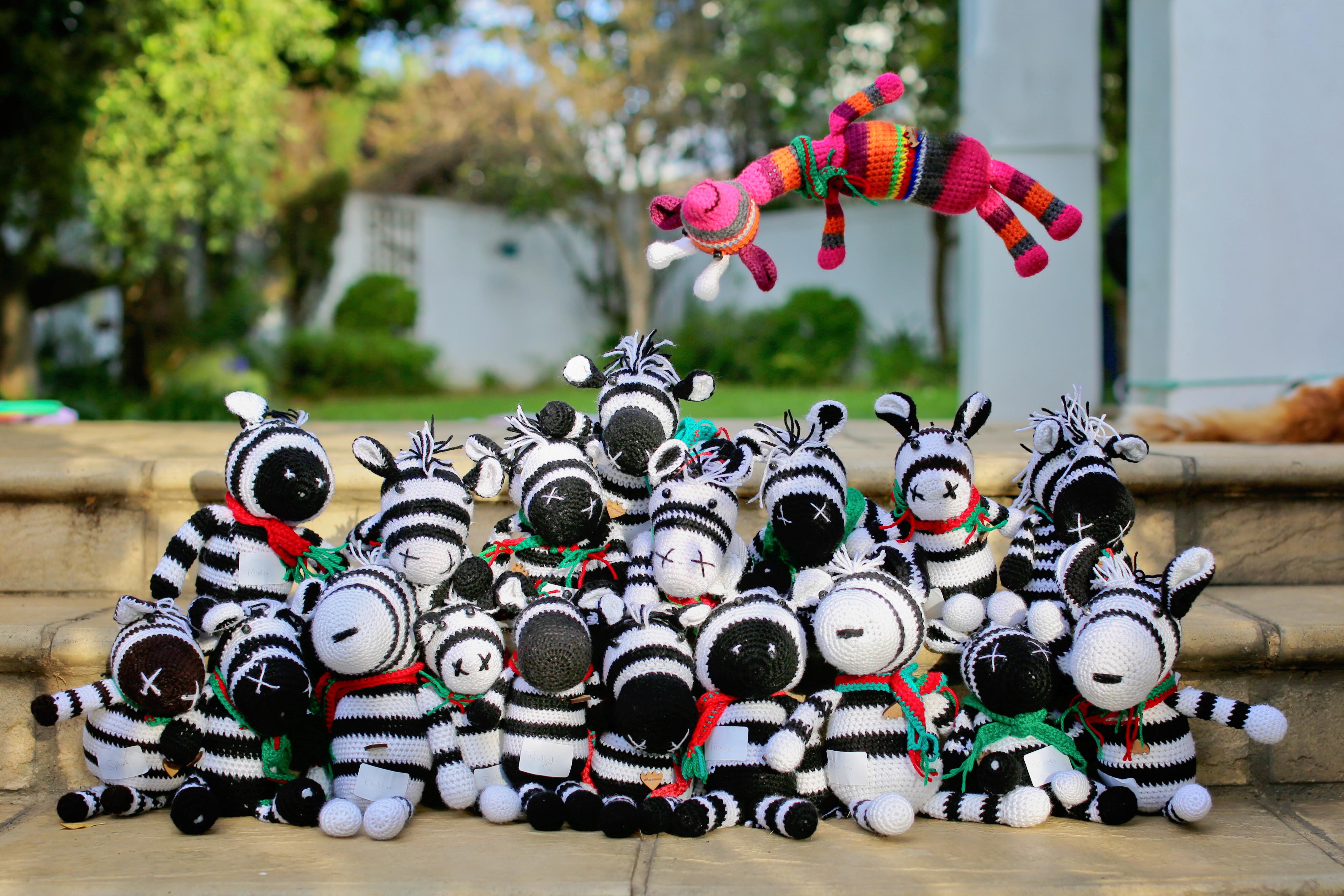Zebras showoff