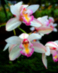 close-up-photography-of-orchids-811232.j