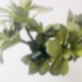 Green Mandarin.jpg