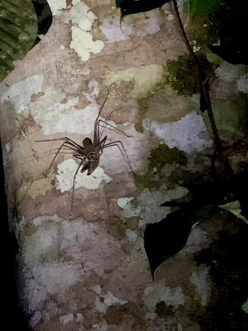 araignee_scorpion.jpg