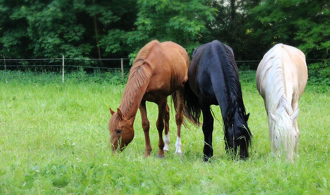 Spanische pfede Wusermark, Pferdegruppe, Reitverein Wustermark