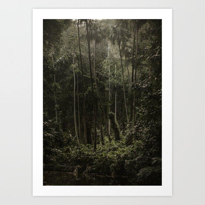 Tijuca Forest nº 7