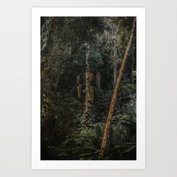 Tijuca Forest nº 16