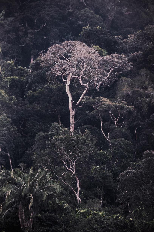 A Floresta da Tijuca VIII