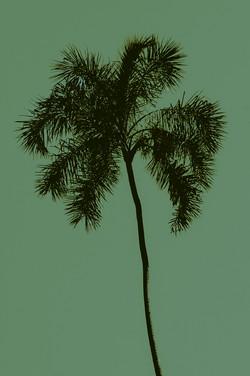 Palmeira I