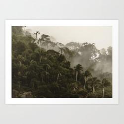 Tijuca Forest nº 9