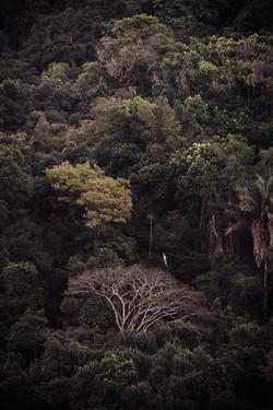 A Floresta da Tijuca VII