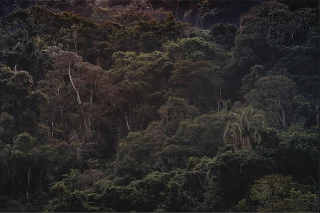 A Floresta da Tijuca V