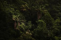 A Floresta da Tijuca I