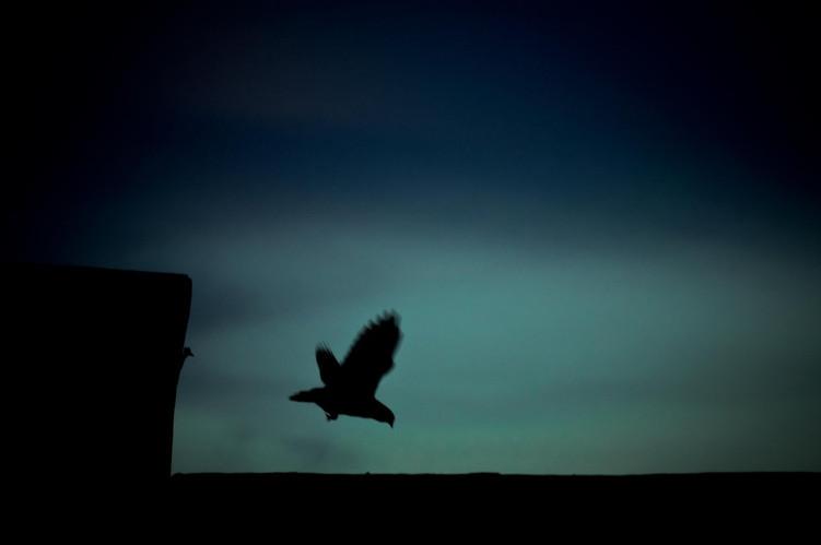 Um voo pássaro
