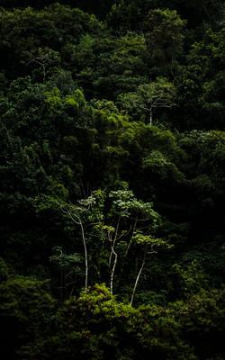 A Floresta da Tijuca VI