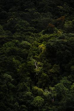 A Floresta da Tijuca II