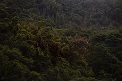 A Floresta da Tijuca III