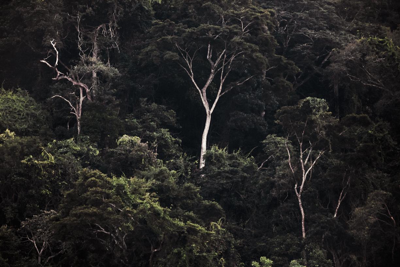 A Floresta da Tijuca IX