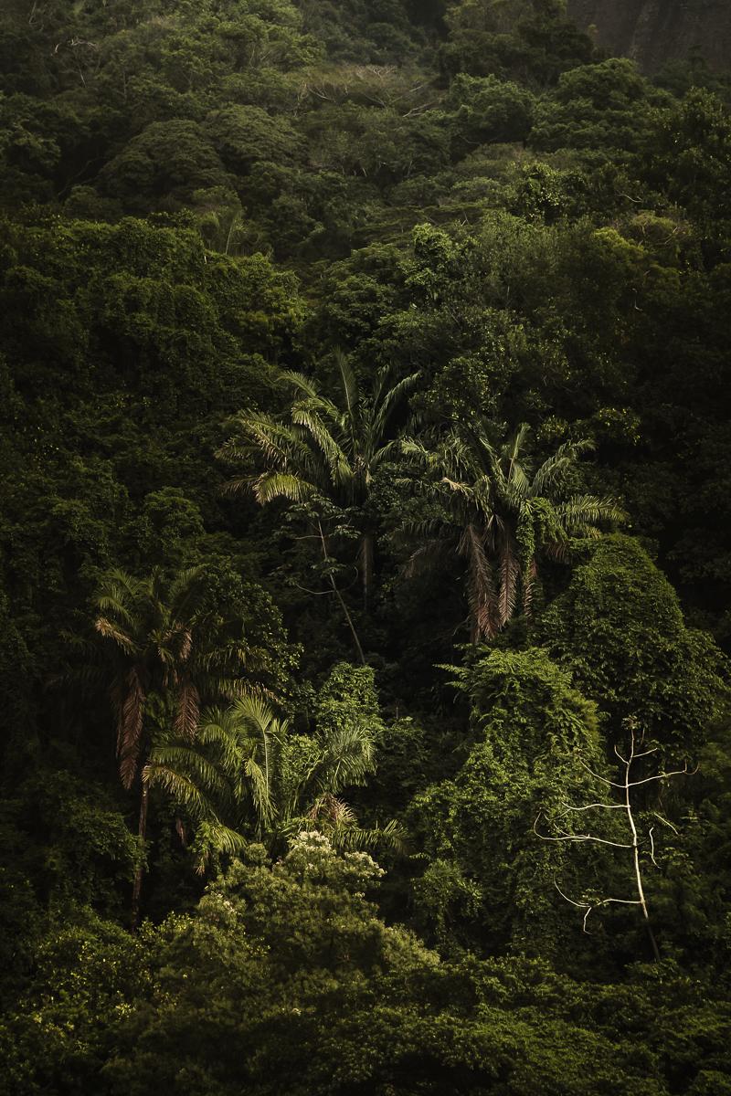 A Floresta da Tijuca IV