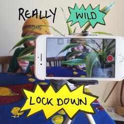 Really Wild Lockdown