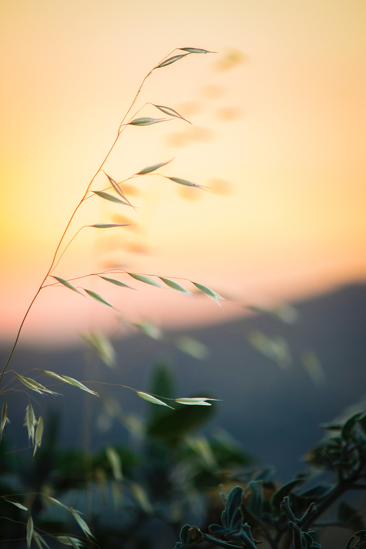 A plant blown by a breeze