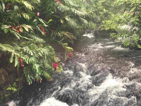 Costa Rican Adventure - May 2017