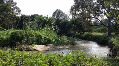 Drainage irrigation