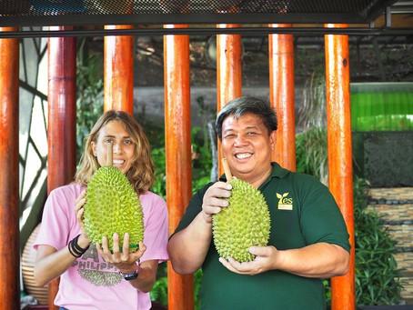 25年老树猫山王 / The 25-year-old Musang King Durian Orchard