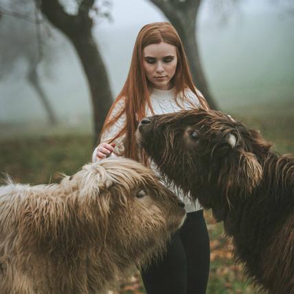 Marigona - Highland Cattles