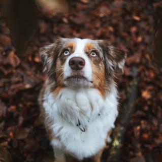 Grace and Kaja - Autumn Woods