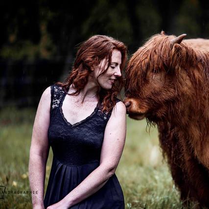 Sabrina - Highland Cattles